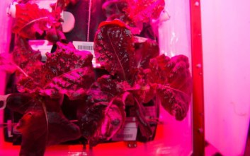 Αστροναύτες θα φάνε σήμερα το πρώτο διαστημικό... μαρούλι