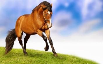 Τα άλογα καταλαβαίνουν τα ανθρώπινα συναισθήματα