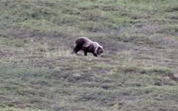 Το αρκουδάκι... κουτρουβαλάει