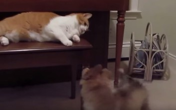 Γάτες συναντάνε κουτάβια για πρώτη φορά