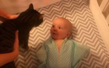 Η πρώτη συνάντηση μπέμπη και γάτας