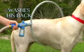 Ιδιωτικό... πλυντήριο σκύλων