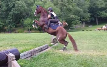 Ίσως το πιο προσεκτικό άλογο ιππασίας