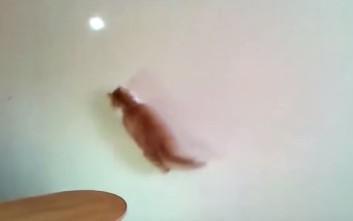 Εξάσκηση για την υπέρβαρη γάτα