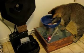 Η γάτα που αναζητά μπαλάκια για να τραφεί