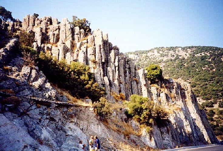 Απολιθωμένο δάσος, Λέσβος