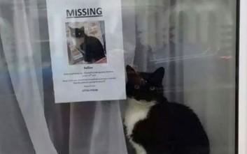 Η χαμένη γάτα βρέθηκε δίπλα από την αφίσα αναζήτησής της