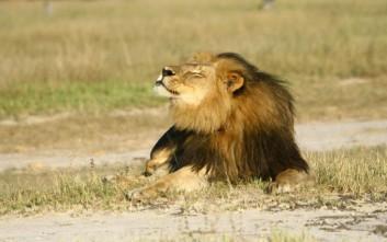 Νομοσχέδιο για την προστασία των ζώων με το όνομα «Σέσιλ»