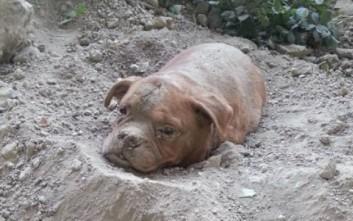 Έθαψαν ζωντανό ηλικιωμένο σκύλο!