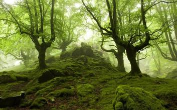 Το δάσος όπως δεν το έχετε ξαναδεί!