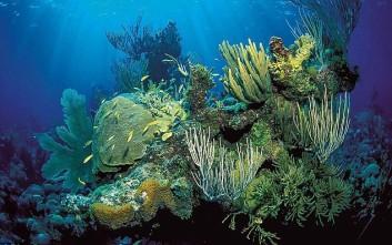 Πεθαίνουν οι ωκεανοί της Γης