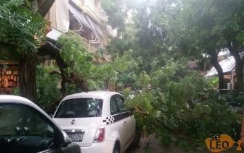 Έπεσαν δέντρα πάνω σε αυτοκίνητα στη Θεσσαλονίκη