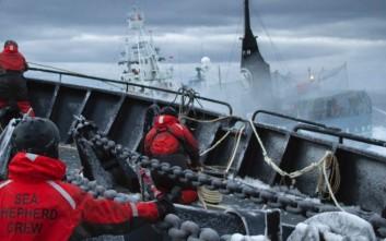 Οι ακτιβιστές που έχουν κηρύξει τον πόλεμο στα φαλαινοθηρικά