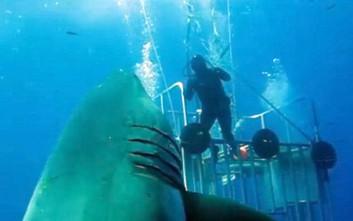 Στη δημοσιότητα βίντεο με τον μεγαλύτερο λευκό καρχαρία στον κόσμο
