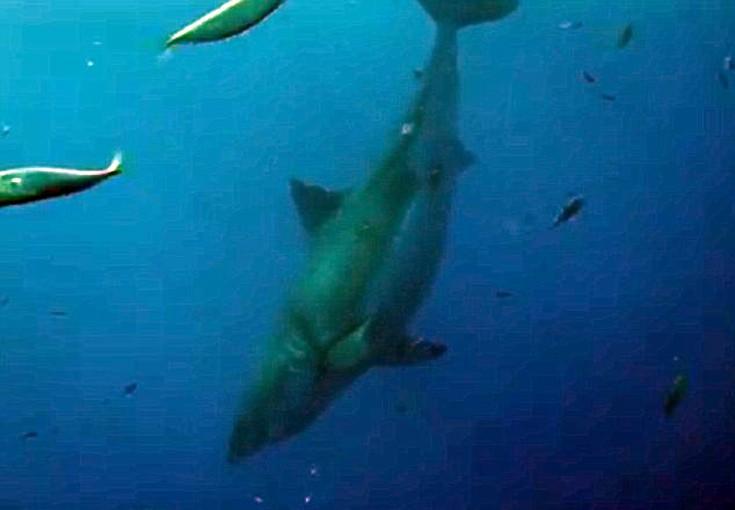 sharkksf4