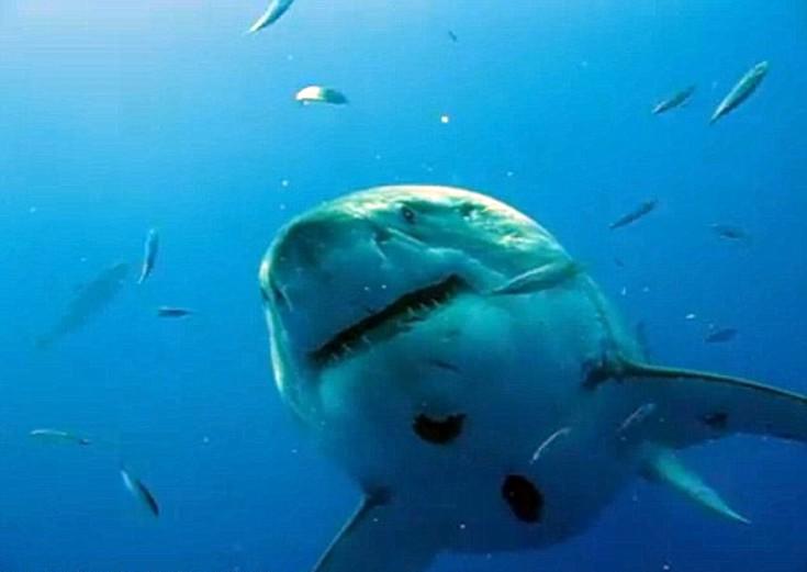 sharkksf5