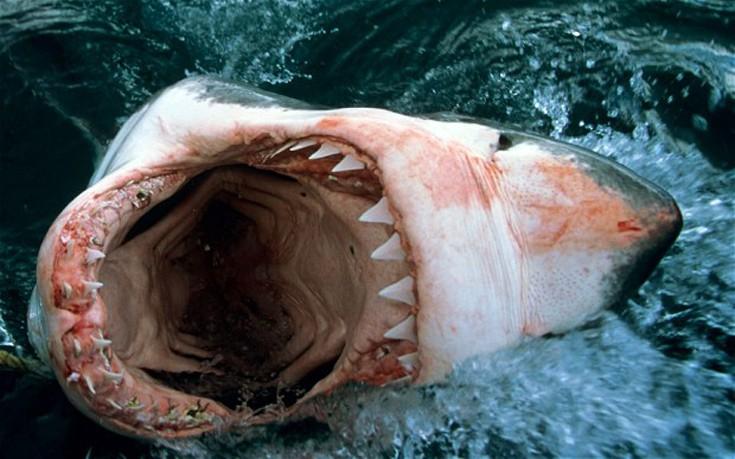 Μερικές αλήθειες για την επίθεση του καρχαρία που προκαλούν… φόβο! (Εικόνες)