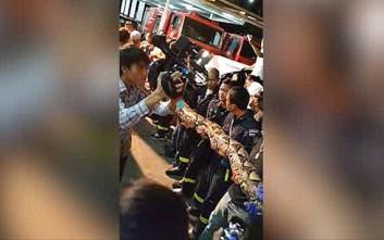 Φίδι οκτώ μέτρων βρέθηκε έξω από εστιατόριο στη Μπανγκόκ