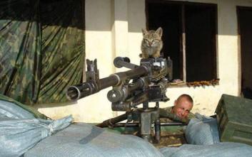 Στρατιώτες και... γατάκια
