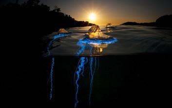 Η εκρηκτική ζωή που πάλλεται κάτω ακριβώς από την επιφάνεια της θάλασσας