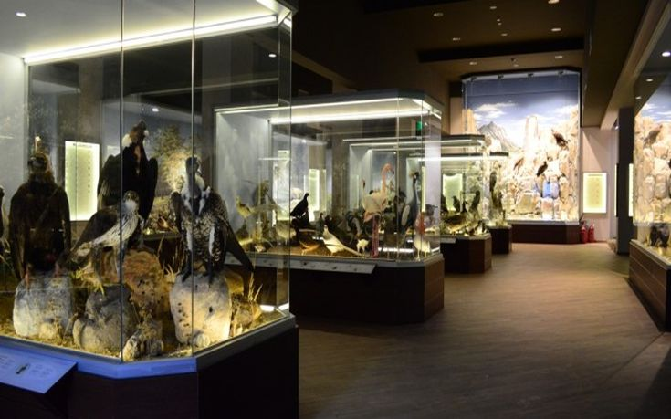 Μουσείου Φυσικής Ιστορίας Μετεώρων – Μουσείου Μανιταριού