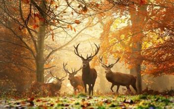 Εικόνες φθινοπώρου