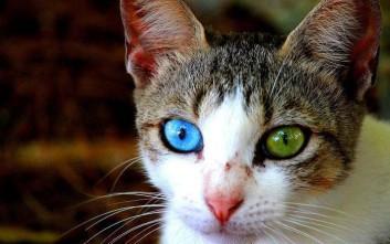 Κοιτώντας τα ζώα στα μάτια