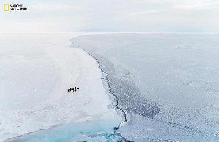 Αυτοκρατορικοί πιγκουίνοι στην Ανταρκτική. Φωτογραφία: Brian Stetson