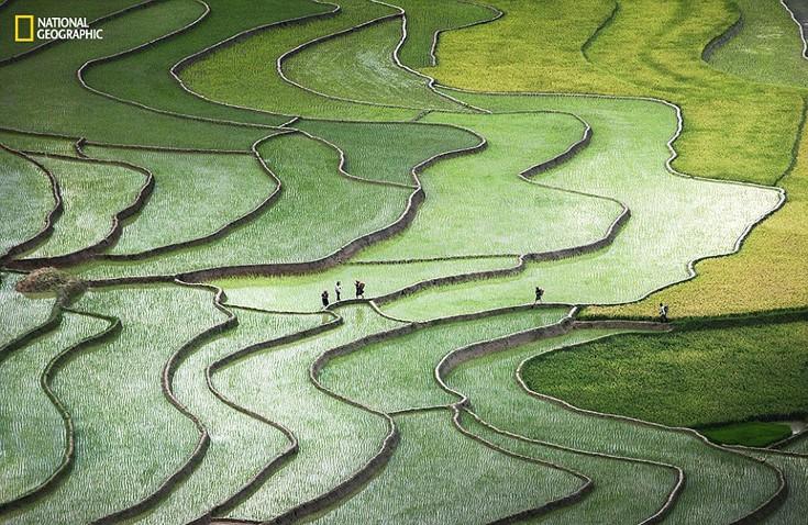 Ορυζώνες στο βόρειο Βιετνάμ στην αρχή της νέας σεζόν. Οι εργάτες τους διασχίζουν επιστρέφοντας σπίτι τους στο τέλος της ημέρας. Φωτογραφία:  Quynh Anh Nguyen