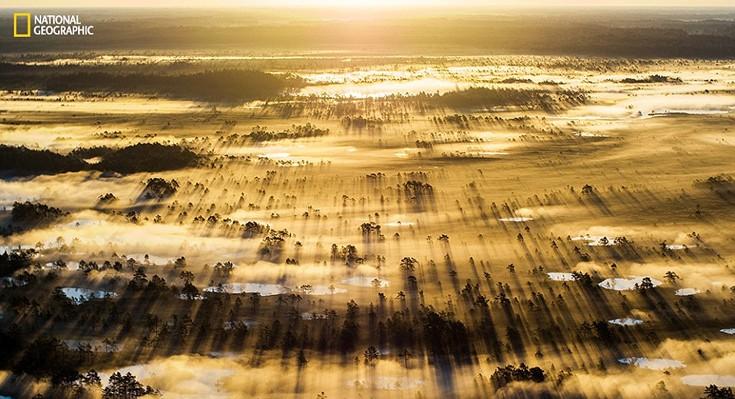 «Μετά το δειλινό παρατηρήσαμε το σχηματισμό ομίχλης και ελπίζαμε να μην χαθεί ως το πρωί. Βάλαμε το ξυπνητήρι μας τρεις ώρες πριν το χάραμα και οδηγήσαμε επί δύο ώρες στο σημείο από όπου μπορούσαμε να έχουμε πανοραμική θέα», περιγράφει ο φωτογράφος Kaiti Lillipuu.   «Στήσαμε γρήγορα το drone μας και το πετάξαμε πάνω από τα δέντρα, η θέα έκοβε την ανάσα: ήλιος, ομίχλη, σκιές».