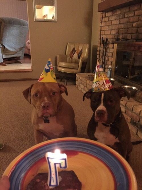 Party-animals-that-worth-taking-to-your-next-party-009