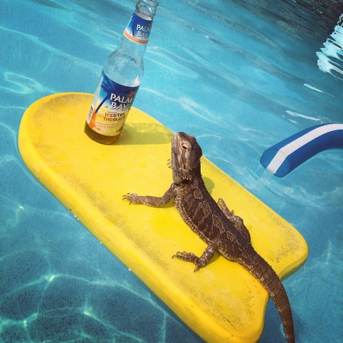Party-animals-that-worth-taking-to-your-next-party-016