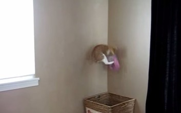 Η γάτα και τα άπλυτα