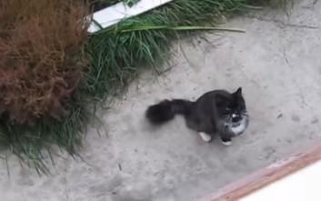 Η επιστροφή της γάτας