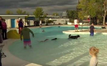Πισίνα άνοιξε μια μέρα αποκλειστικά για σκύλους