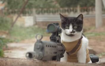 Γάτες εναντίων ζόμπι