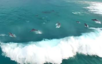 Δελφίνια παίζουν στα κύματα