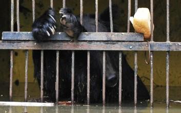 Τραγικό τέλος για τα ζώα πλημμυρισμένου ζωολογικού κήπου στη Ρωσία