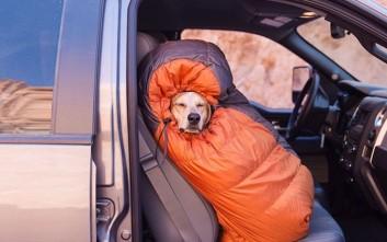 Πηγαίνοντας για camping με το σκύλο μου