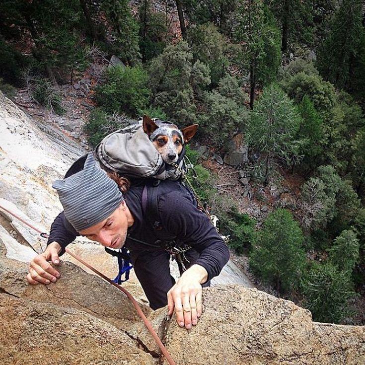 camping-with-dog-ryan-carter-24__605