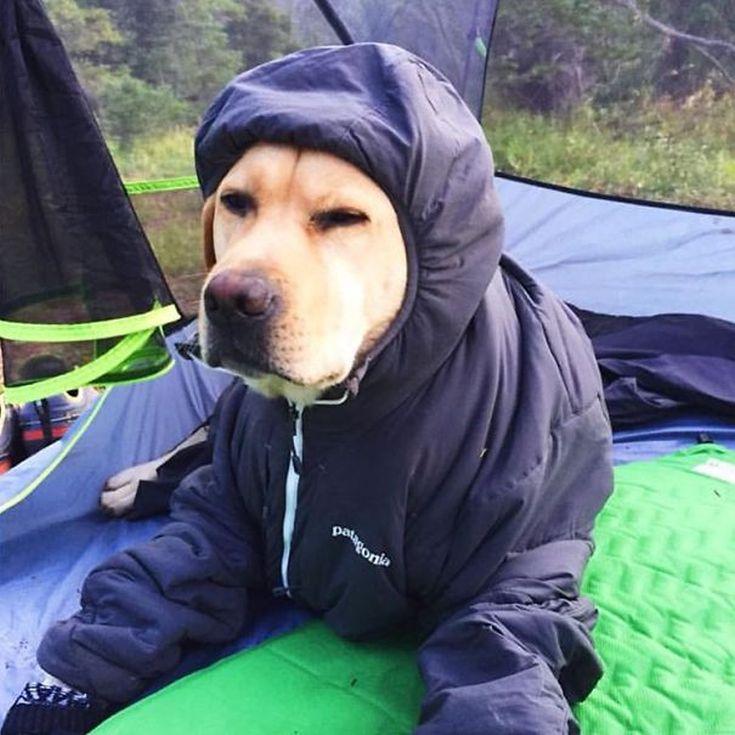 camping-with-dog-ryan-carter-63__605