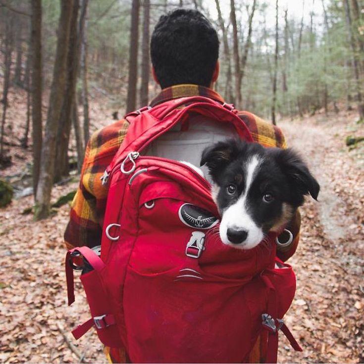 camping-with-dog-ryan-carter-98__605