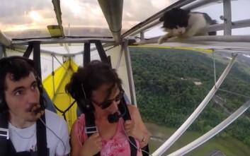 Γάτα κοιμήθηκε στο φτερό αεροπλάνου και ξύπνησε… στον αέρα
