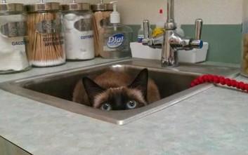 Περίεργες συμπεριφορές από γάτες στην κουζίνα