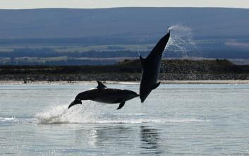 Όταν τα δελφίνια χορεύουν