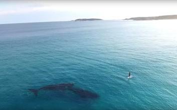 Μια μαγική συνάντηση στη θάλασσα