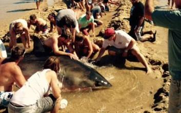 Μάχη για τη σωτηρία καρχαρία που βγήκε στην ακτή