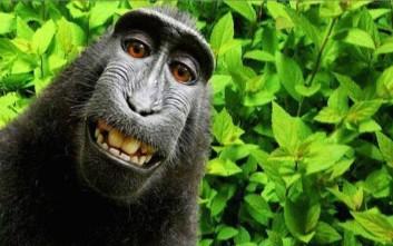 Μια μαϊμού με πνευματικά δικαιώματα των selfies της!