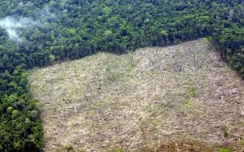 Το φοινικέλαιο αφανίζει τα δάση