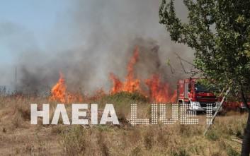 Στάχτη έγιναν 40 στρέμματα στη Μανωλάδα